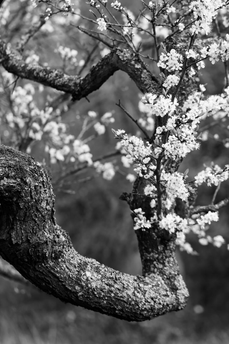Le bouquet. Photographe Marc Przybyl